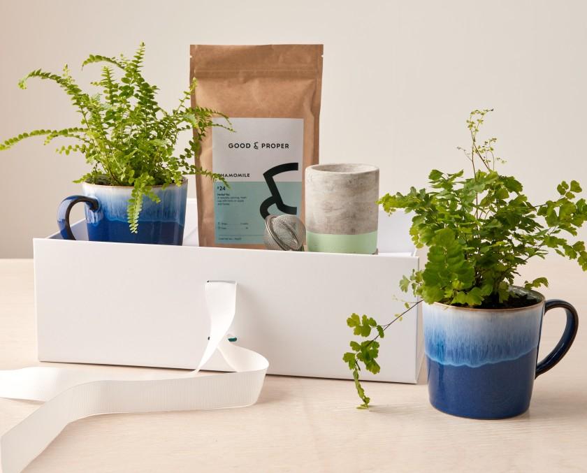 Mug Plant